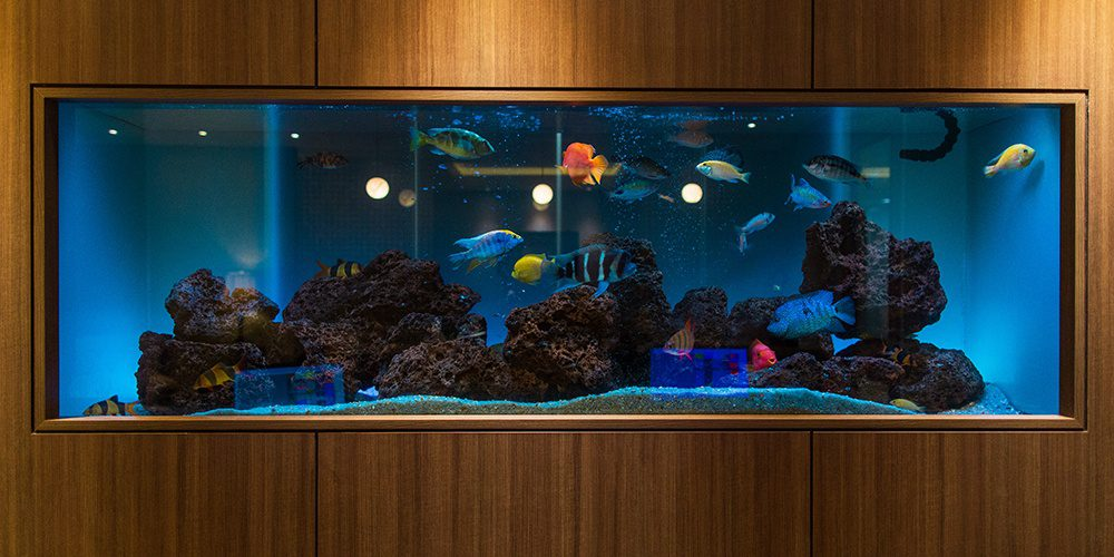 Office Fish Tank with Colorful Fish